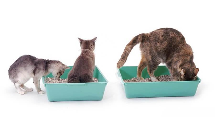 приучение кошек к горшку