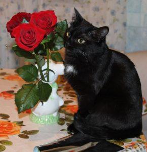 кошка с розами
