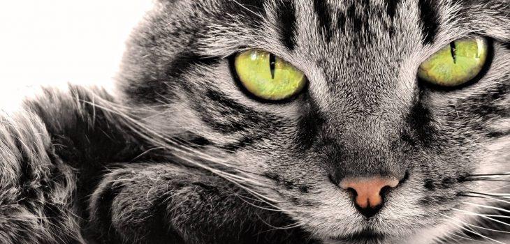 куда отдать кошку осн
