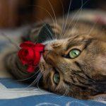 кошка с цветком
