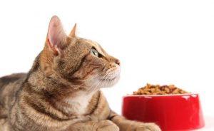 кошка с красной миской