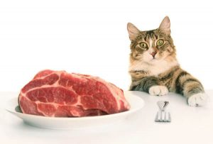 кошка и натуральный корм