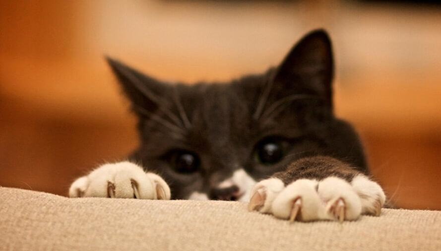 котенок царапается осн