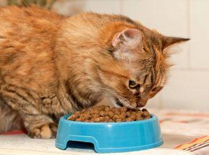 кошка с голубой миской