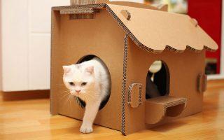 дом для кошки осн