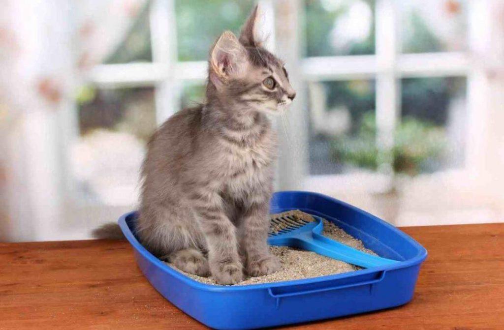 котэрвин для кошек осн