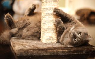 кот и когтеточка осн