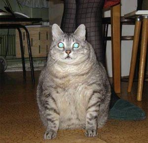 кошка Кэти