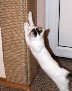 кошка с когтеточкой