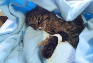 кошка под капельницей
