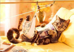 кошка с травмой