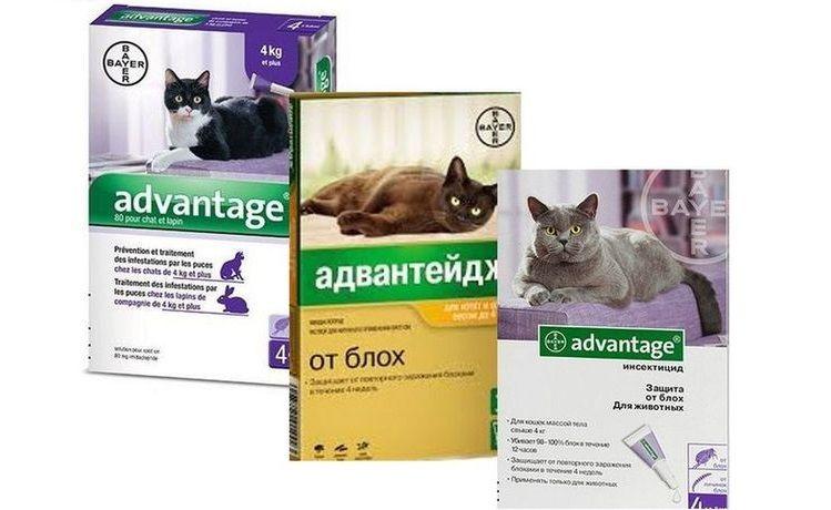 Капли Адвантейдж для кошек инструкция и противопоказания