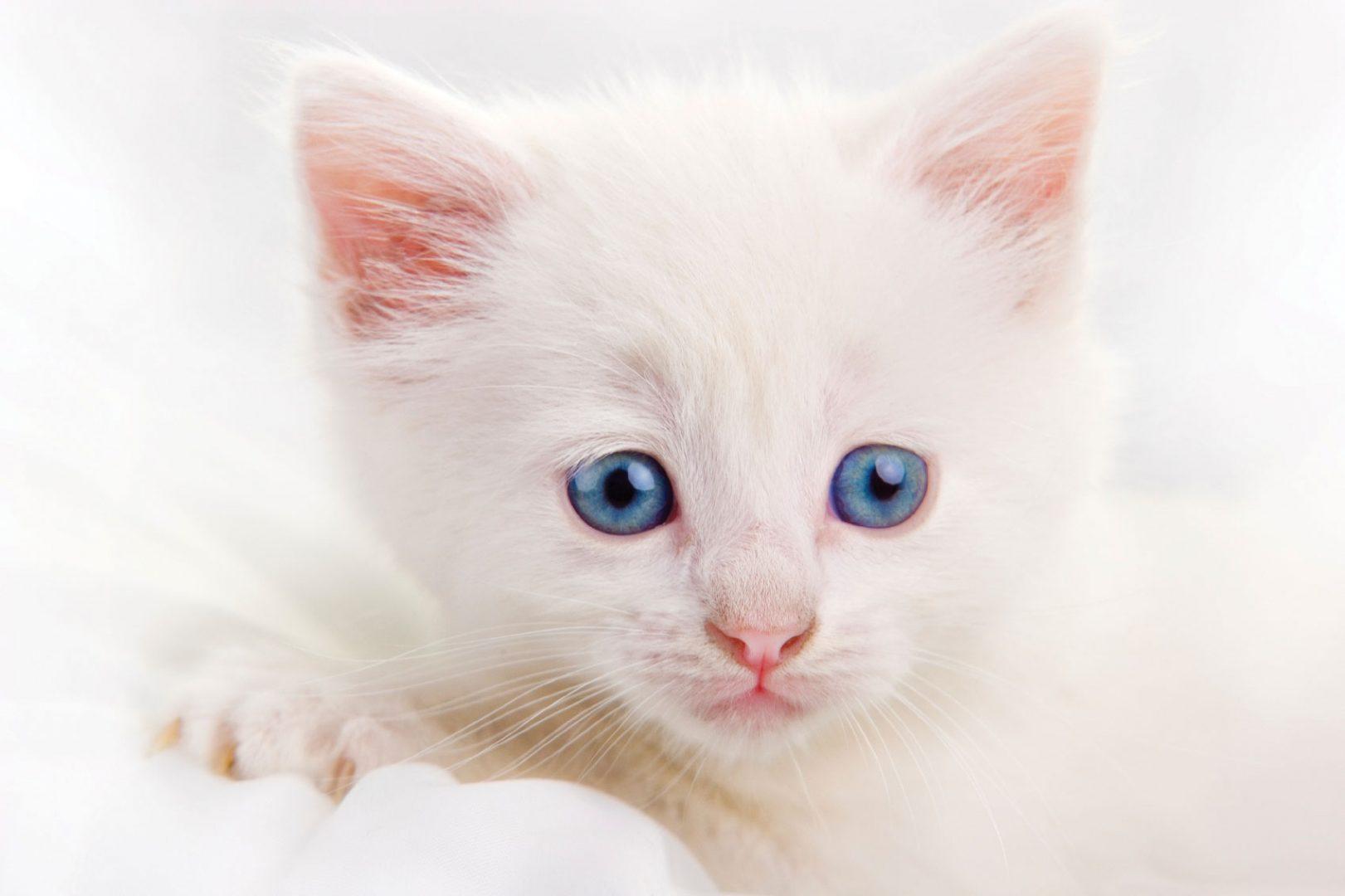 Картинки милого котенка с голубыми глазами, день победы мая
