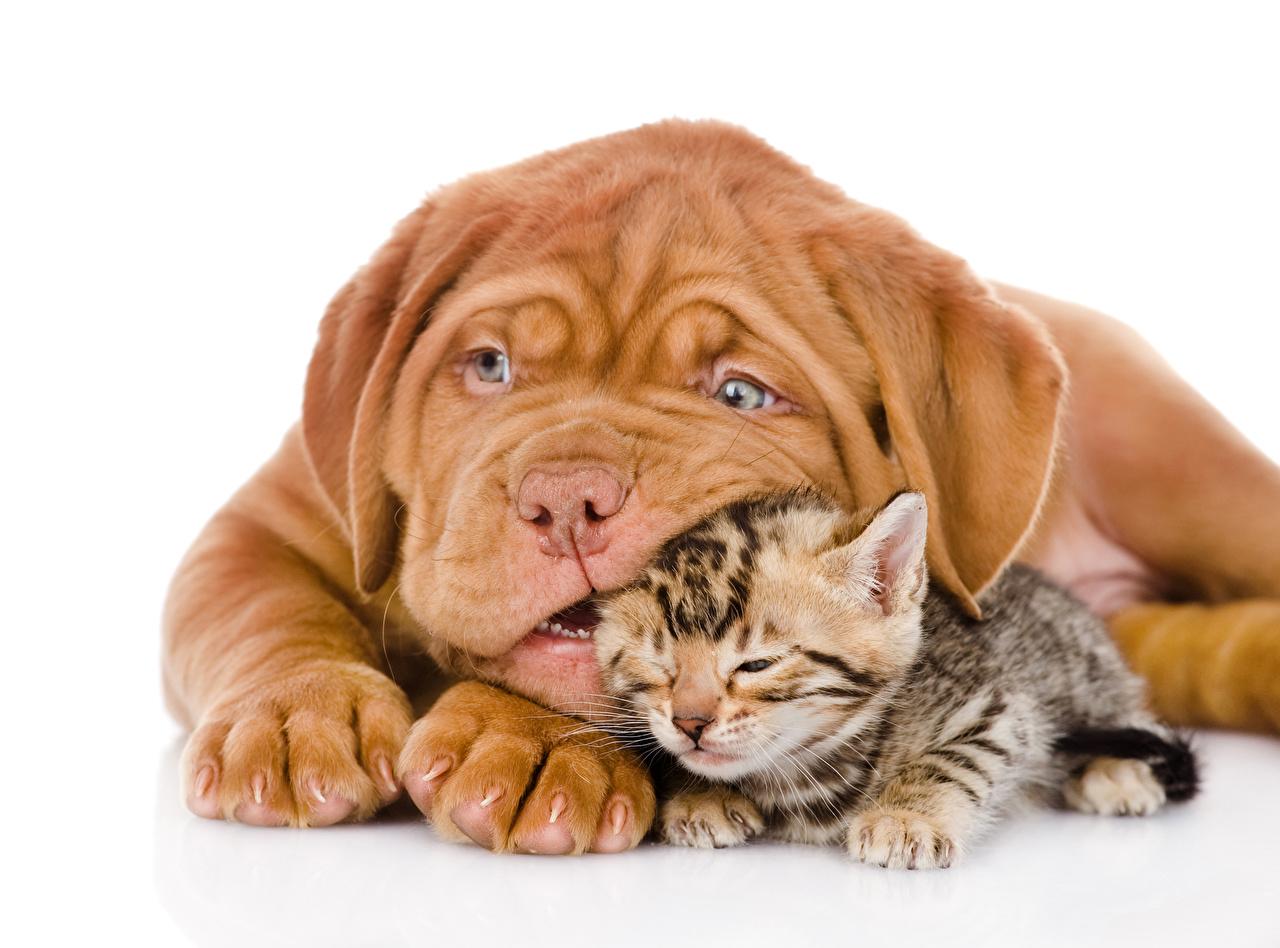Как подружить кошку с собакой в квартире и как их правильно кормить?