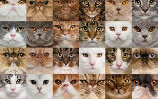 самая красивая кошка