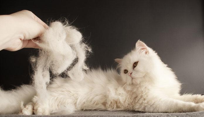 кошка сильно линяет