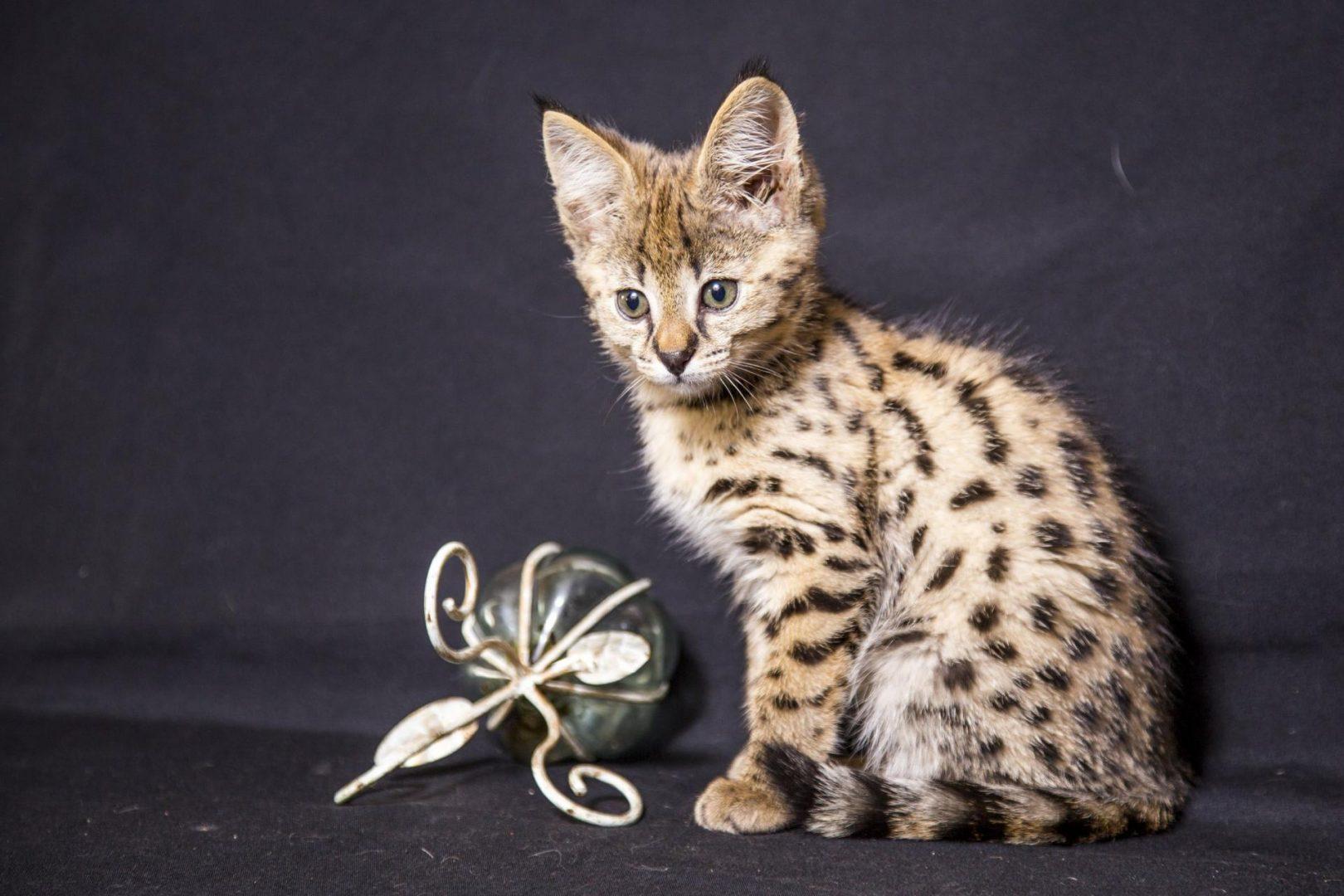 Коты и пятница фото вертикальной ориентации