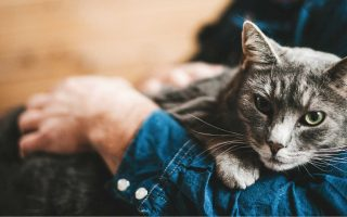 человеческий возраст кошки
