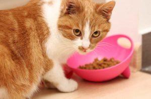 рацион кастрированного кота