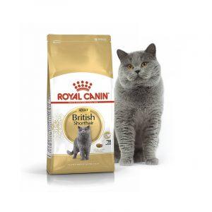 Royal Canin British Shorthair корм