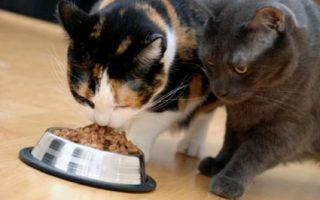 Orijen корм для кошек