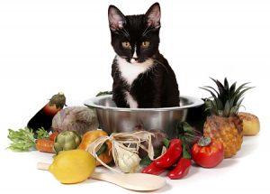 Питание кошки