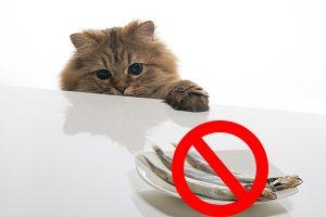 Запрещенный корм для кормящей кошки