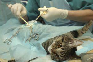 Хирургический способ лечения
