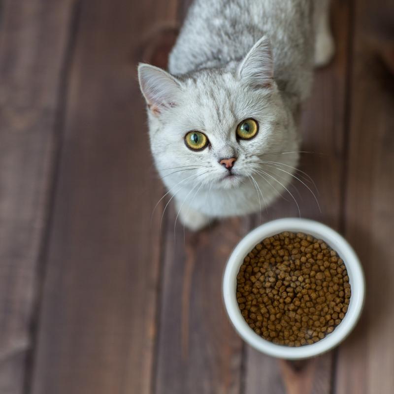Бозита корм для кошек