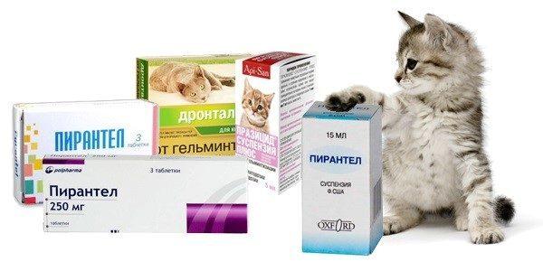 глистогонное для кошек