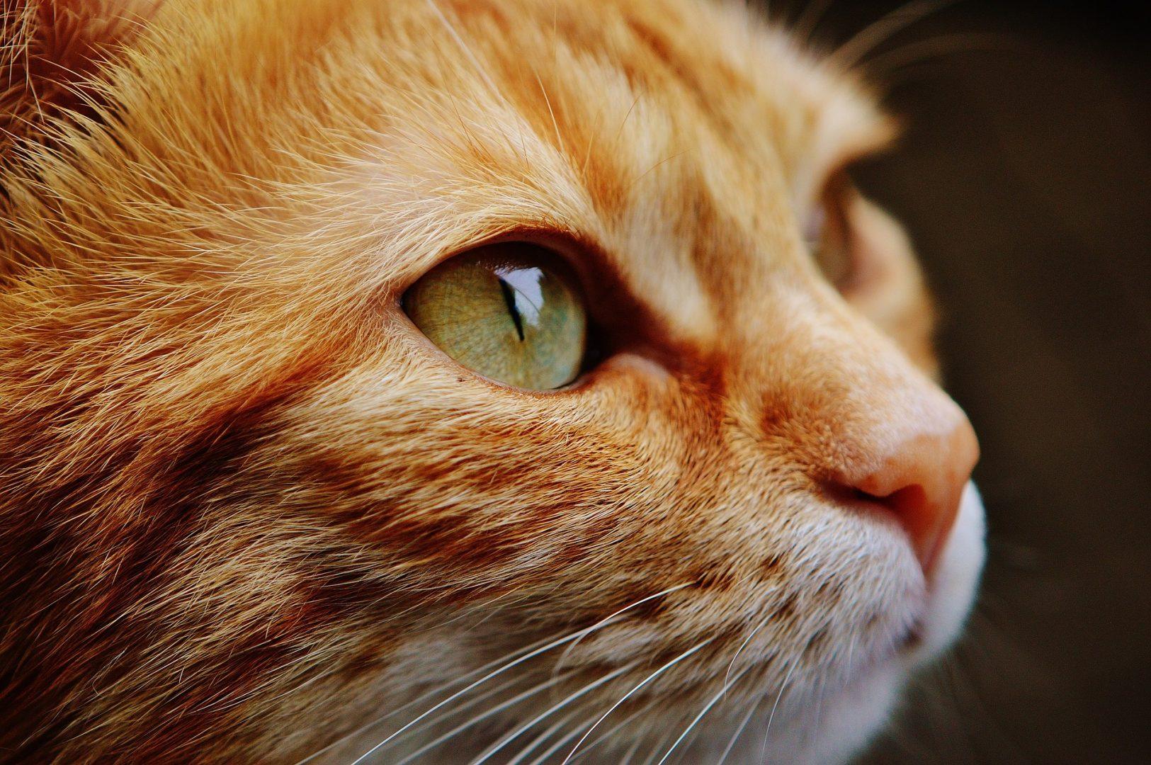 Как выбрать эффективные капли в уши для кошек