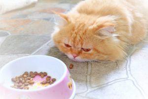 Чувствительное пищеварение у кошек