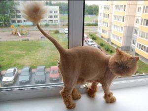 Стрижка кошек на дому