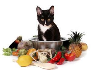 натуральная диета для кошек