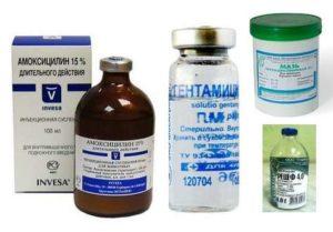 Терапия простуды у кошек - антибиотики
