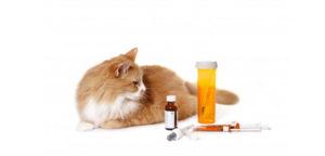 Можно ли давать животным человеческие антибиотики
