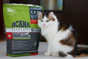 акана для кошек