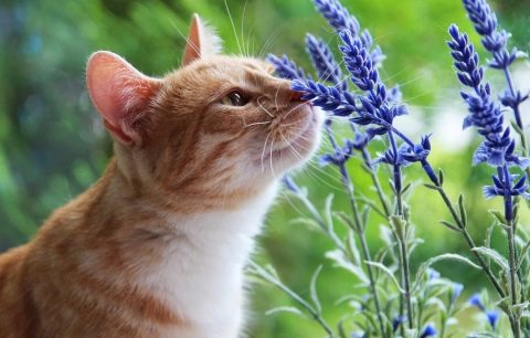 Какой запах не любят кошки