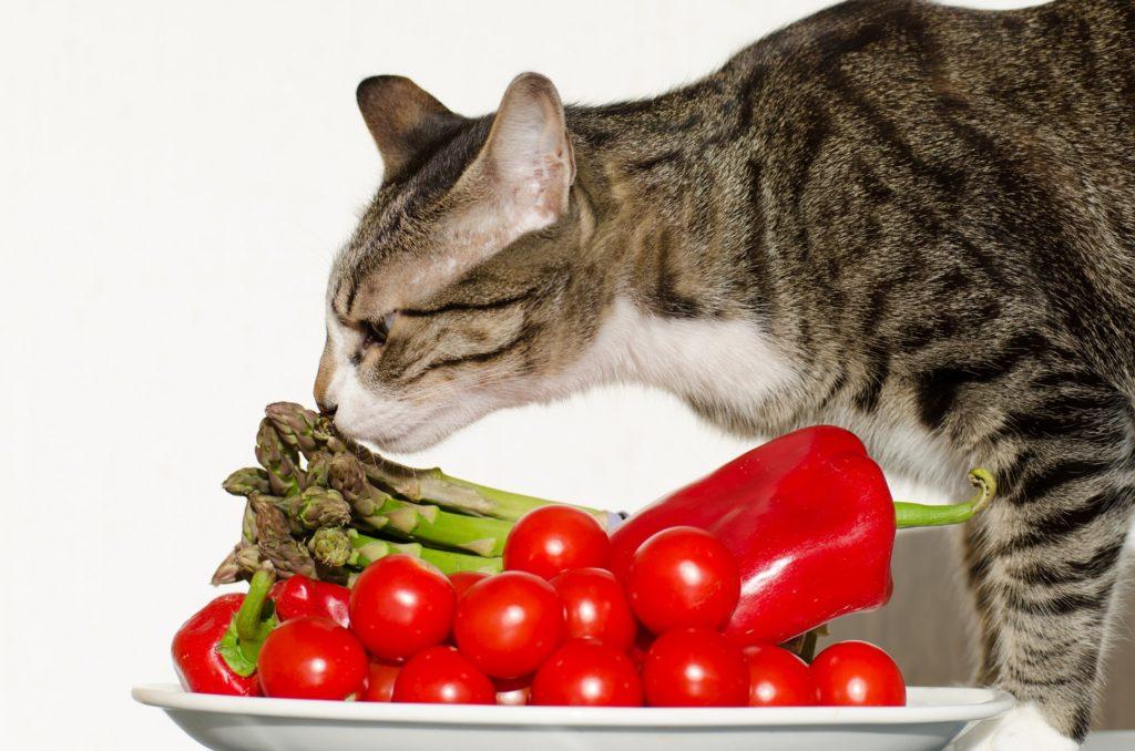 Натуральный корм для кошек