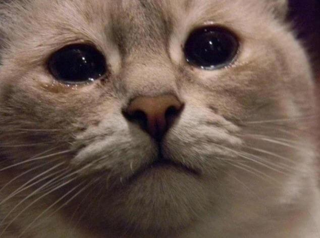 Что будет если на новый год будешь плакать